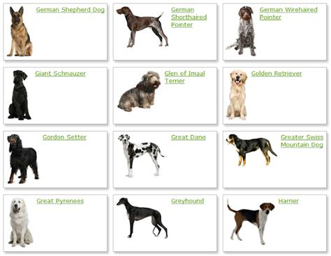 types of dogs dogs breeds land dog breeds list with picture