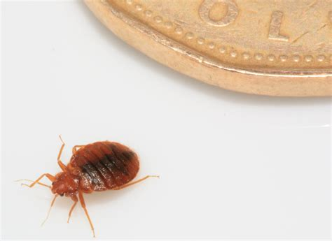 bed bugs force hotel guest  chop hair  cleaning