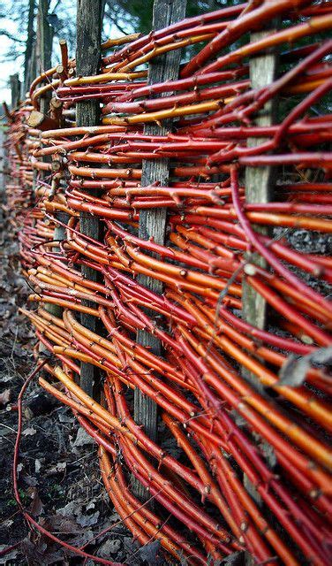 Sichtschutz Aus Pflanzen 2463 by Woven Fence The Color From The Dogwood Branches
