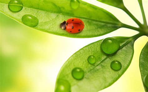 imagenes de ideas verdes fondos de pantalla de hojas verdes y mariquita tama 241 o