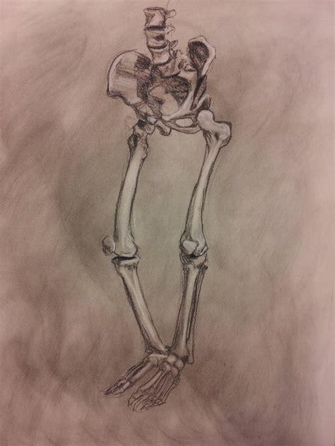 figure study skeleton lower pelvis by richardblumenstein
