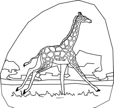 imagenes jirafas para pintar jirafas para colorear