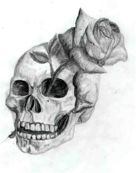 the images collection of rose skull beautiful pencil