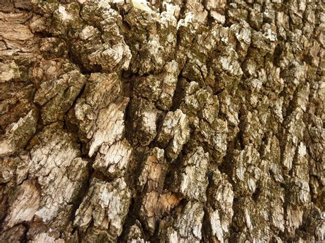 mlewallpapers com tree bark ii
