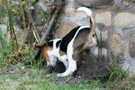 why do dogs bury bones why do dogs bury bones lovetoknow