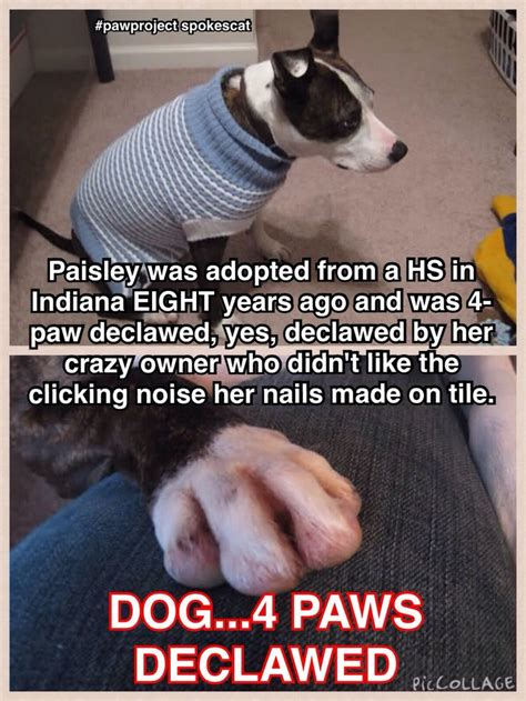 declawing dogs dogs now declawing is evil dogs