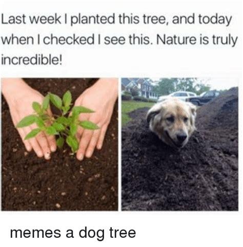 Incredible Meme - 25 best memes about incredibles meme incredibles memes