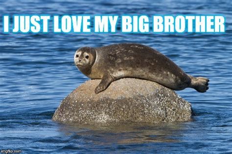seal  rock loves  big brother imgflip