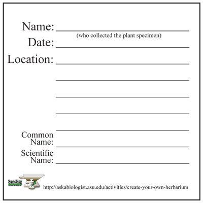 plant information card template how to make an herbarium label step 7 labelling your