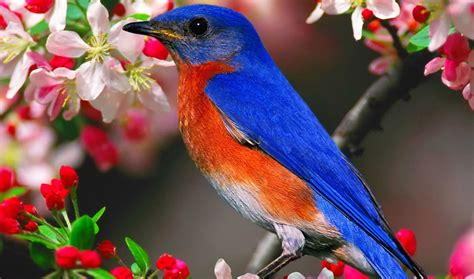 colorful birds wallpaper hd 9 bird animals colorful animals 231 colorful birds hd