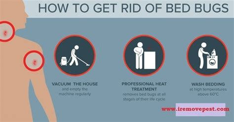 what do exterminators use to kill bed bugs what do you use to kill bed bugs quora