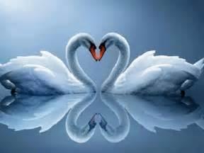 imagenes de imageneshermosascom 2012 musicas romanticas internacionais s 243 as melhores youtube