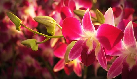 orchids facts 15 amazing facts about orchids the plant guide