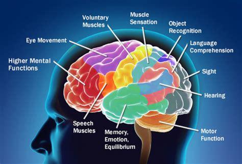 brain tumor diagram what causes brain cancer driverlayer search engine