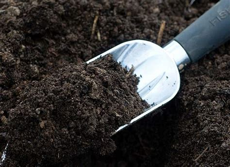 make your garden s soil more fertile with these 8 simple