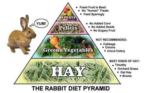 rabbit food the rabbit diet pyramid animals and things related the o jays rabbit