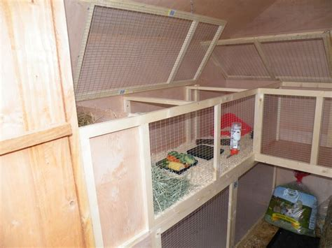 Do Pigs Shed by 316 Best Images About Guinea Pig Room On Cavy Guinea Pigs And Bunnies