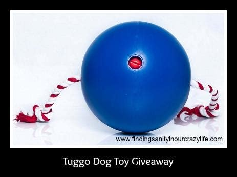 Dogs For Giveaway - tuggo dog toy giveaway the bandit lifestyle