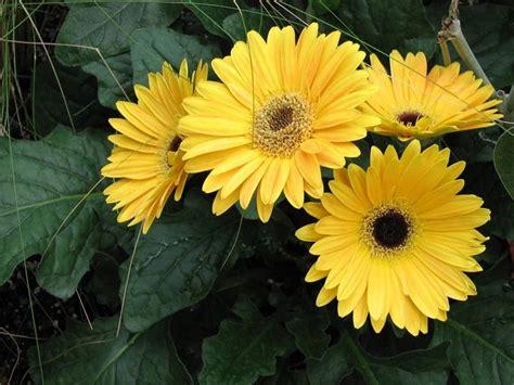 con fiori piante con fiori alberi piante con fiori caratteristiche
