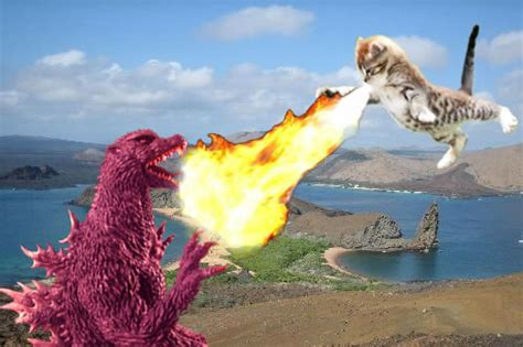 ultimate battle godzilla  cats riot daily