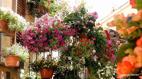 terrazze fiorite foto spello finestre balconi e vicoli fioriti 2017 hd