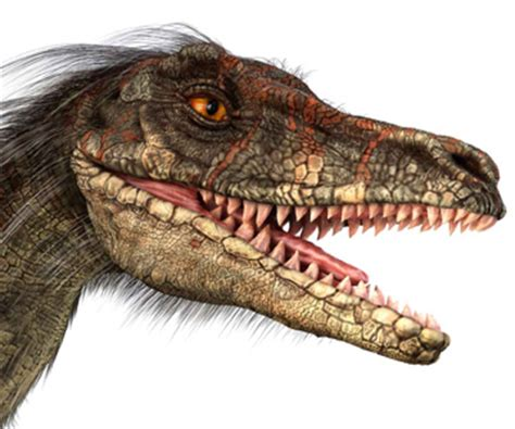 what does velociraptor eat it december 6 2011 everything dinosaur blog