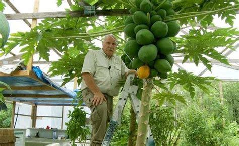 gardening hydroponics learn the amazing of growing fruits books aquaponics and hydroponics aquaponics