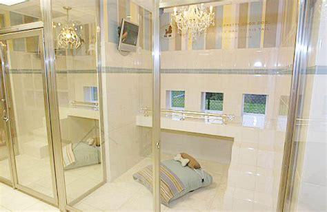 luxury boarding kennels www imgkid the image kid has it