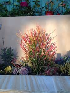 Backyard Tropical Landscaping Ideas - 25 best ideas about desert plants on pinterest desert landscape desert landscaping backyard