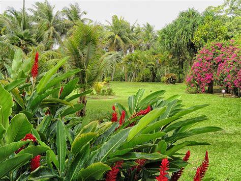 garten wissen mediterrane und tropische pflanzen f 252 r den garten garten