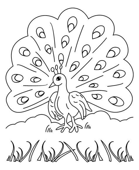 animal coloring pages peacock free printable peacock coloring pages for kids