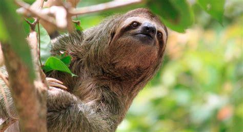 imagenes de animales raros en el mundo galer 237 a de im 225 genes los animales m 225 s raros del mundo