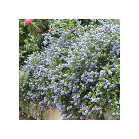 Arbuste A Fleur 762 by Les 25 Meilleures Id 233 Es De La Cat 233 Gorie Arbuste Fleurs