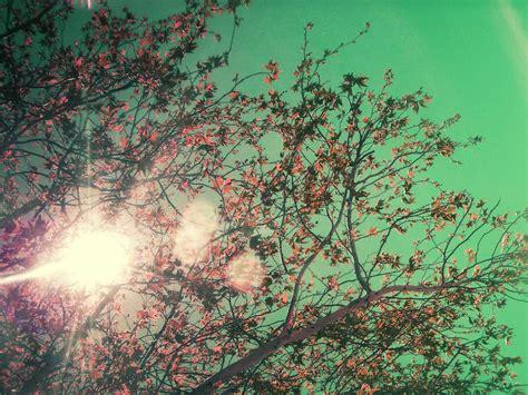 imagenes vintage mar enero 2012 caminos del espejo