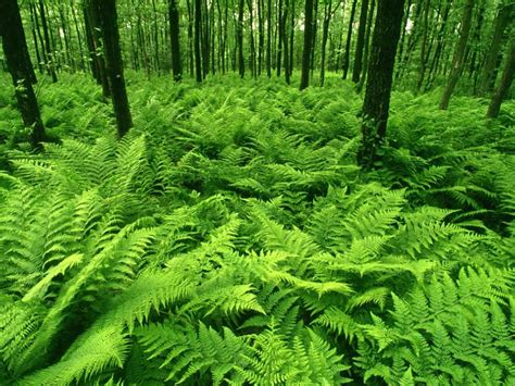 forest green world visits green forest best wallpapers images