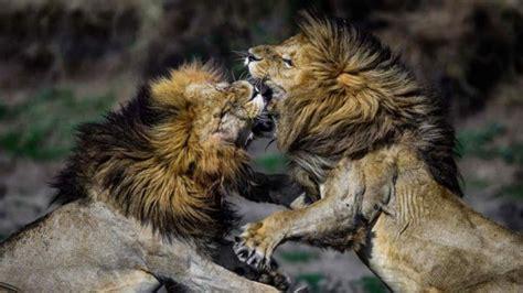 Imagenes Variadas De Animales | hermosas im 225 genes para descargar gratis de animales de la
