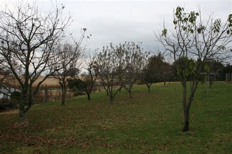 fruit trees for sale washington state property for sale with two 2 homes and 5 acres in