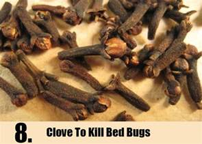 Bed Bugs Remedies 8 Home Remedies To Kill Bed Bugs Http Www