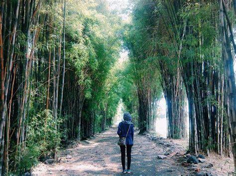 Harga Survival Di Hutan by Rute Dan Harga Tiket Masuk Hutan Bambu Keputih Spot