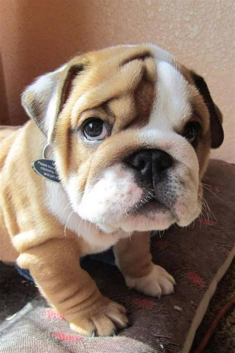 friendly breeds lovely pet s top 10 budget friendly breeds