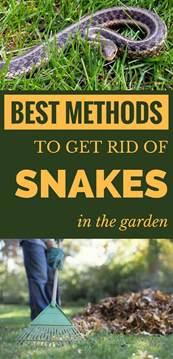 Garden Snake Get Rid Of Best Methods To Get Rid Of Snakes In The Garden