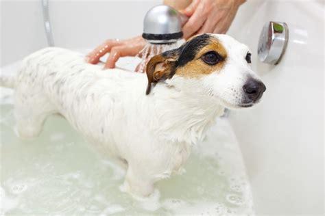 giving a puppy a bath giving a a bath in the winter