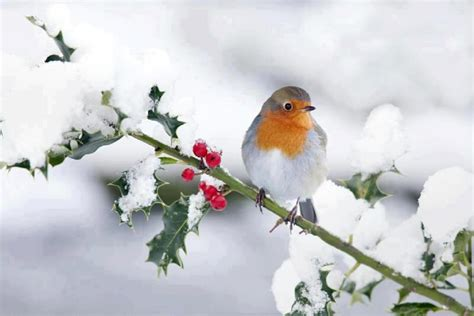 in snow bird in snow wallpaper wallpapersafari