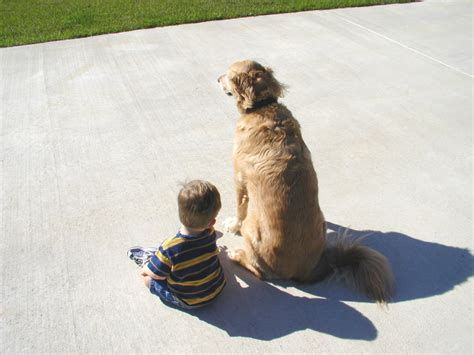 puppies and toddlers toddlers and dogs show similarities in social intelligence healthjourno