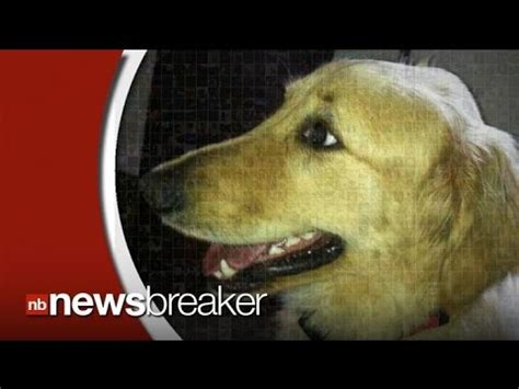 golden retriever petco petco s self service wash funnydog tv