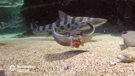 baby shark walikota bogor raya on tumblr