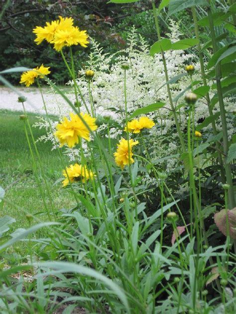 perennial garden zone 5 70 best my perennials zone 5 images on