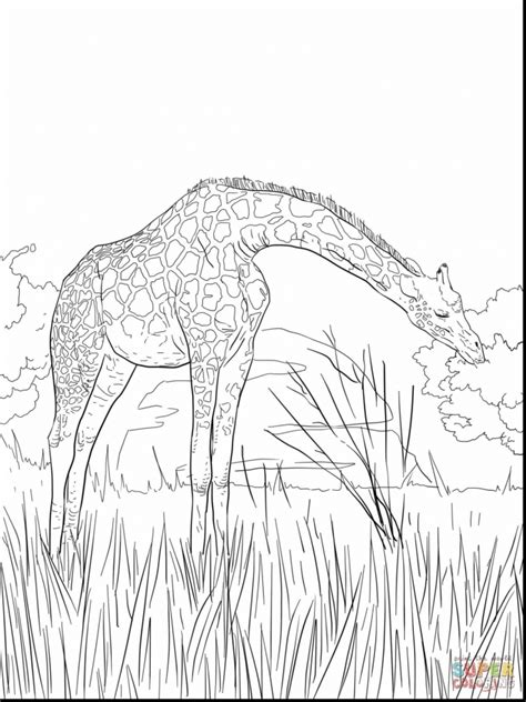 difficult giraffe coloring pages get this giraffe coloring pages hard printables for older
