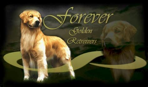 golden retriever breeders midwest midwest golden retriever breeder resource