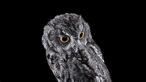 owl background owl wallpaper for desktop 74 images